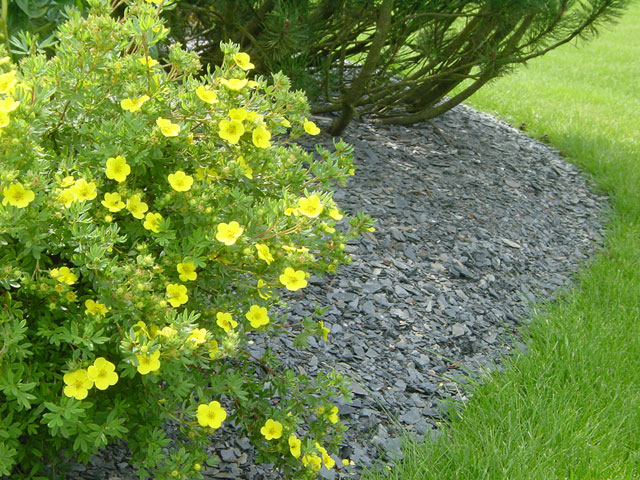 paillis dardoise fleur, aménagement paysager